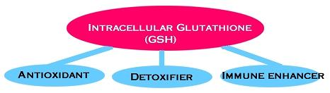 The Role of Glutathione